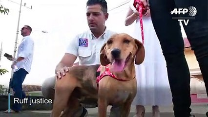 Ruff Justice : dog attends animal abuse trial in Costa Rica
