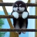 Ce chiot suspendu à une branche est tellement cute !! - Vidéo dailymotion