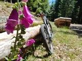VT'été : la vallée de Saint-Amarin à vélo tout terrain à assistance électrique. La boucle de la Neumatt.