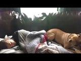 Pitbull rettet 10-Jährigen nach Badewannen-Unfall.