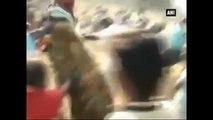 Madurai -  Villagers Offer Special Prayers, Conduct Symbolic Jallikattu Event