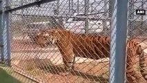 Chhattisgarh -  PM Narendra Modi Takes Jungle Safari In Naya Raipur