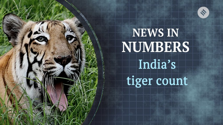 What tiger census tells us about the population in India: News in Numbers