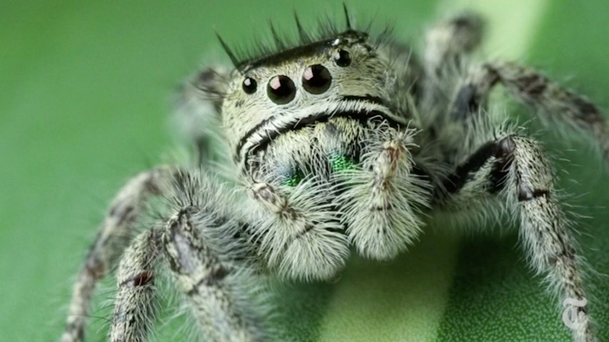 Science Take | How to give a spider an eye test