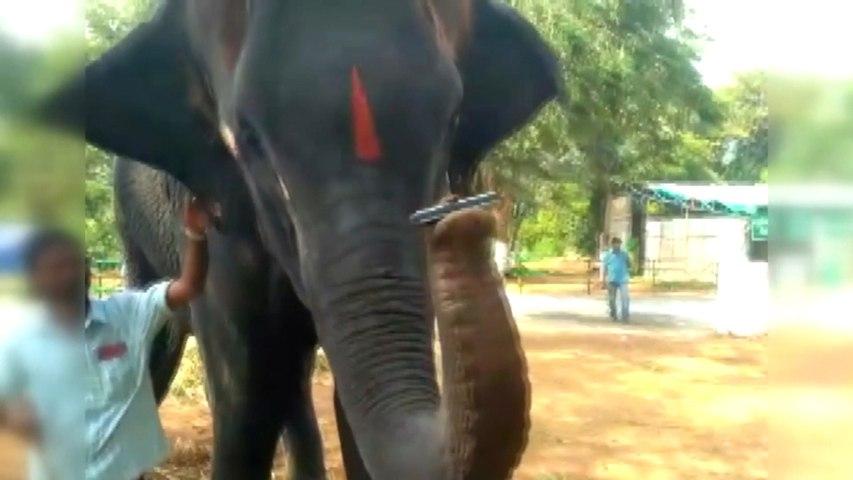 Elephant plays the harmonica at Thekkampatti Elephant Camp