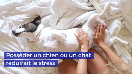 Posséder un chien ou un chat réduirait le stress