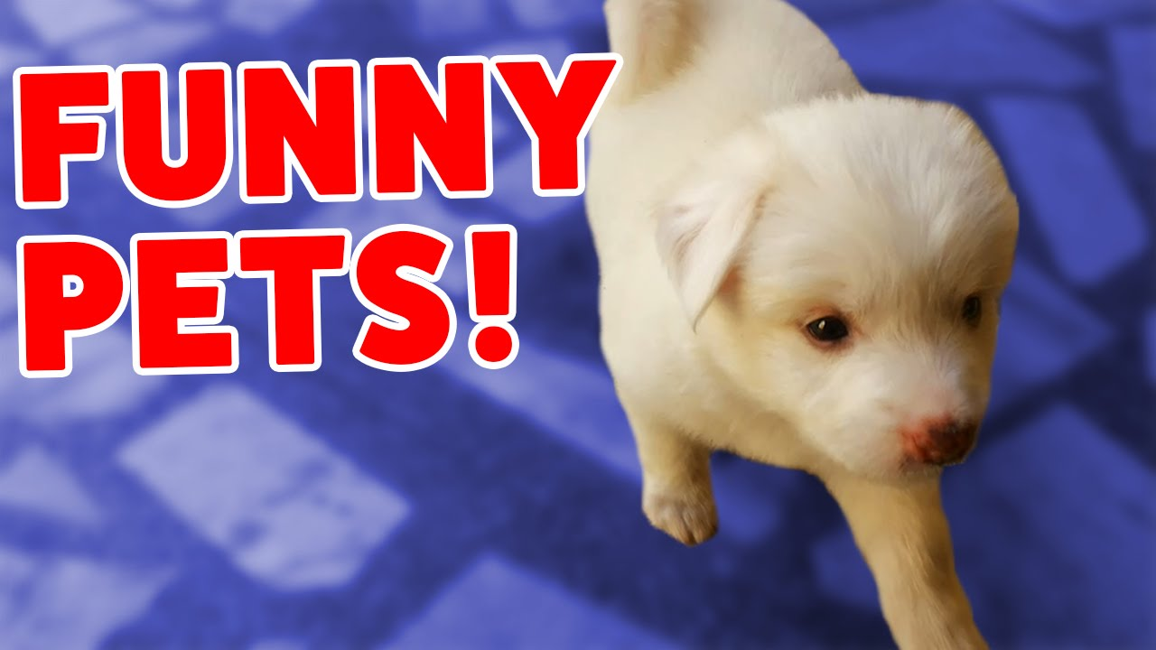 PUPPY DOG HIDES UNDER STUFFED ANIMALS – MORE Funny Video Compilation of 2016 – Funny Pet Videos