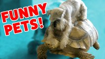 DOG RIDES A TURTLE - MORE Funny Pet Videos, Bloopers - Moments of 2016 Weekly Compilation