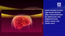 Does Love Spark Better Heart Health