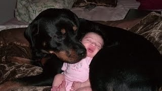 Rottweiler Dogs And Babies Kissing And Playing Happy Together Compilation –  Dog Loves Baby videos