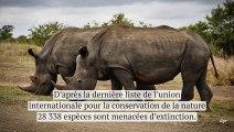 Nous sommes en train de pousser plus de 28000 espèces vers l'extinction