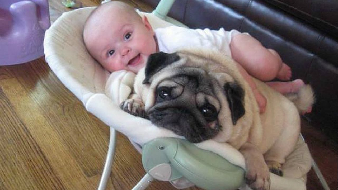 Cute Baby Laughing At Pug Dogs Will Make You Happy – Funny Dogs and Baby