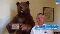 L'Ours empaillé : le porte-bonheur du Palais
