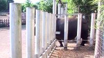 Canicule : les soigneurs de Beauval aux petits soins avec les animaux