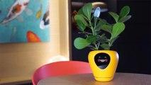 Découvrez l'humeur de votre plante