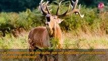 Les chasseurs de la honte : Interview d'un chasseur