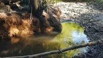 PAYS VIENNOIS. Des rivières à sec et des poissons à l'agonie