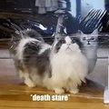 Chats Intelligents ! Regardez comment ces chats intelligents s'en sortent face aux obstacles !