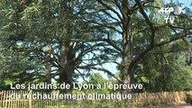 Les jardins de Lyon à l'épreuve du réchauffement climatique