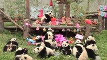 18 bébés pandas d'une réserve naturelle chinoise fêtent leur tout premier anniversaire
