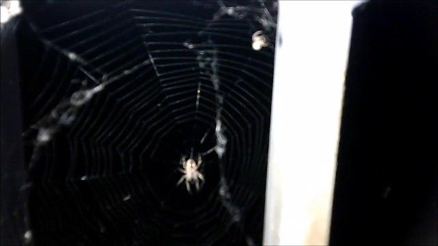 MCH 140 SPIDERS.ARACHNOPHOBIA.WEB-SLINGER.