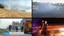 Canicule : 6 500 hectares ont brûlé