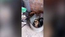 Cachorrinho aparece agonizando e dono acredita em envenenamento
