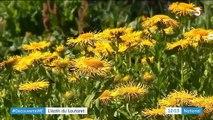 Environnement : à la découverte du jardin du col du Lautaret
