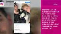 Sophie Turner et Joe Jonas : les jeunes mariés traumatisés par la perte de leur chien