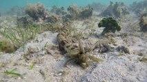 Ce plongeur découvre une créature mystérieuse au fond de la mer