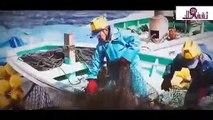 شاهد بالفيديو كيف يتم صيد السمك بكميات عملاقة