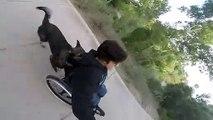 Ce chien aide sa maîtresse handicapée en poussant le fauteuil roulant !