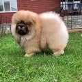 funny  and cute dog