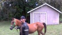 Zusammen mit Pferd: Mann bricht in Haus ein