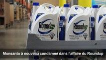 Monsanto reconnu coupable dans le procès Roundup