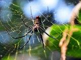 ¿Por qué las arañas no quedan atrapadas en su red?