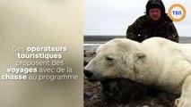 Pour interdire les vacances de chasse à l'ours polaire