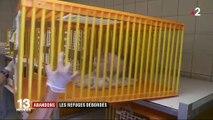 Abandons d'animaux : les refuges de la SPA deviennent saturés