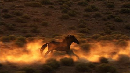 Why Wild Horses Are at Risk