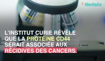 Une protéine dans nos organes, accusée de favoriser la récidive de cancers