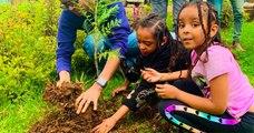 L'Éthiopie a battu le record de reforestation avec plus de 350 millions d'arbres plantés en seulement 12 heures