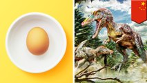 Bocah penggila sains temukan sarang telur dinosaurus saat bermain di sungai - TomoNews