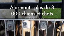 Alarmant : plus de 8 000 chiens et chats ont déja été abandonnés cet été !