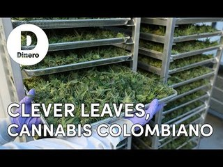 Clever Leaves, cannabis colombiano