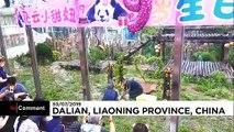"""شاهد: الباندا """"في يون"""" تحتفل بعيد ميلادها مع أطفال ولدوا معها بنفس اليوم"""