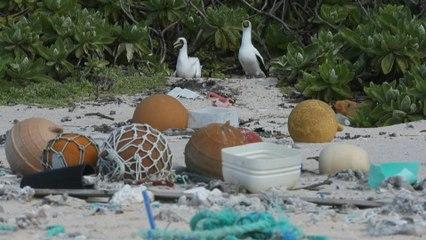 Plastic junk spawns desert island disaster in Pacific