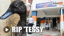 RIP 'Tessy': Duck abandoned in attack on Mkini's old office dies
