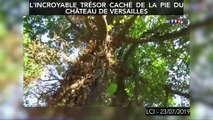 L'incroyable trésor caché de la pie du château de Versailles (VIDEO : l'étonnant trésor retrouvé au château de Versailles)