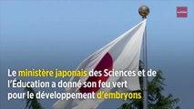 Science : le Japon autorise le développement d'embryons humains-animaux