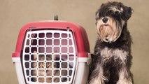 ¿Sabes cómo elegir el mejor transportín para tu mascota?